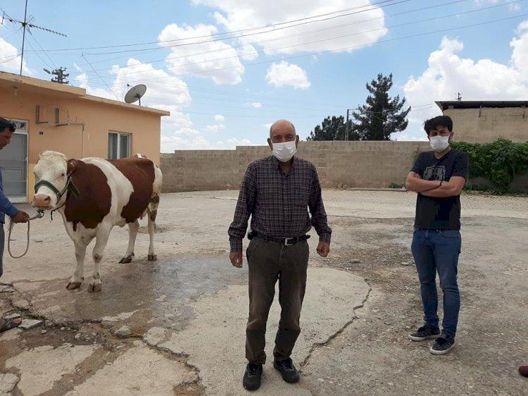 Nizip'li çiftçi 'Biz bize yeteriz' kampanyasına ineğini bağışladı