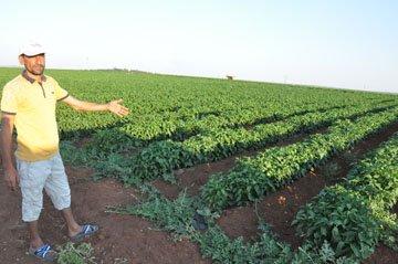 Çiftçinin