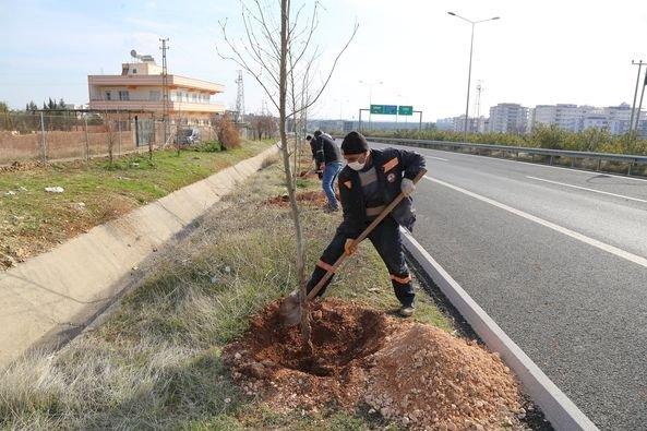 Nizip'te ağaçlandırma çalışmaları